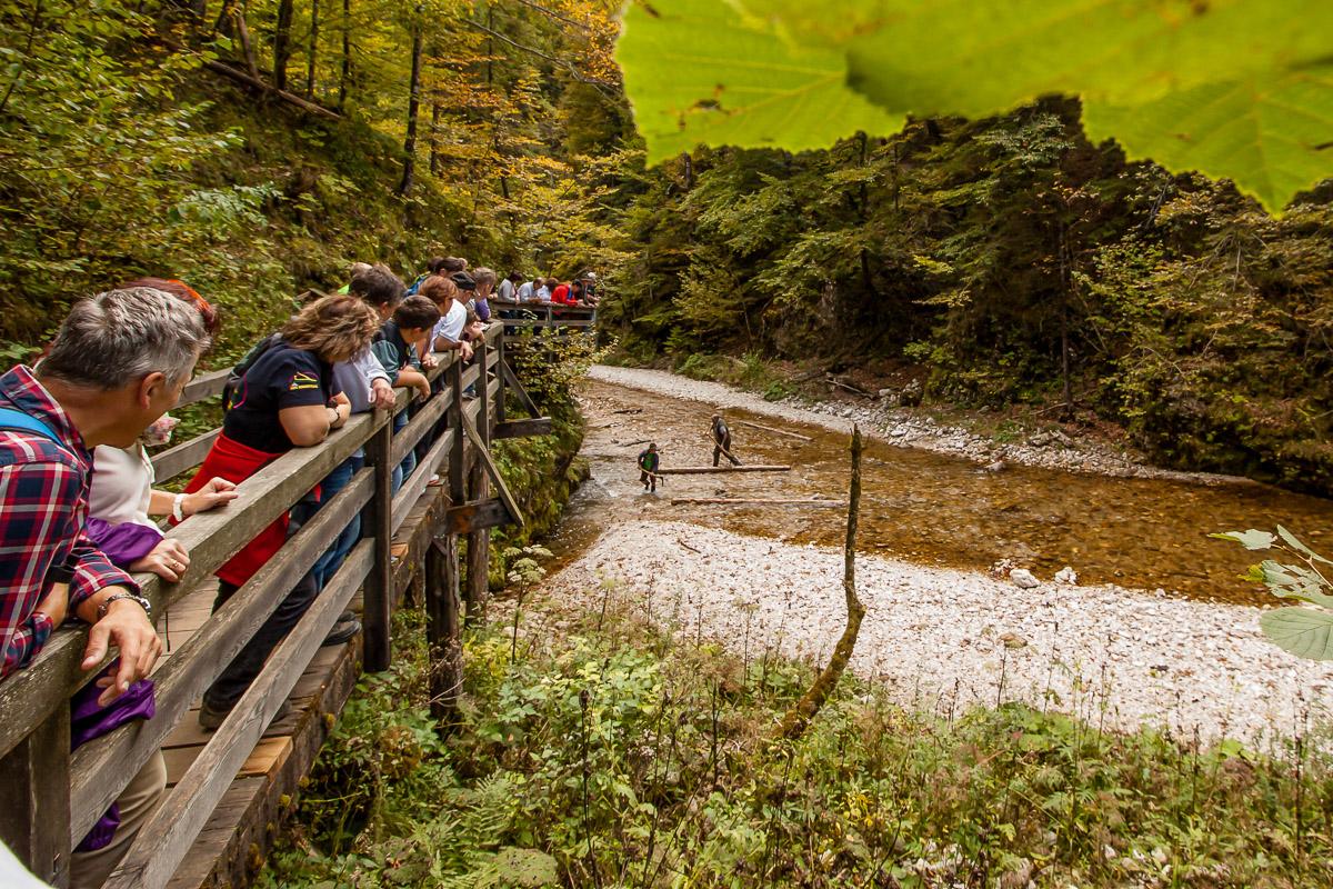 Schautriftvorführung |Mendlingtal Göstling-Hochkar | Auf dem Holzweg