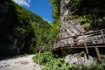 Auf dem Holzweg im Mendlingtal bei Göstling-Hochkar